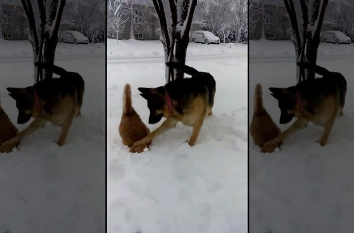 Bad Dog Pushes Cat's Head Into Snow