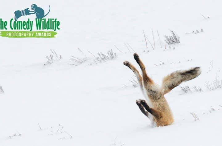 Comedy Wildlife Photo Awards
