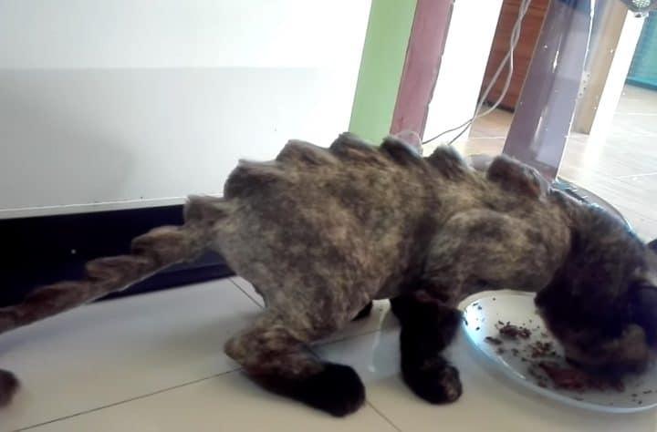 Dinosaur Haircut