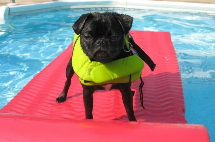 dogs floaties pools