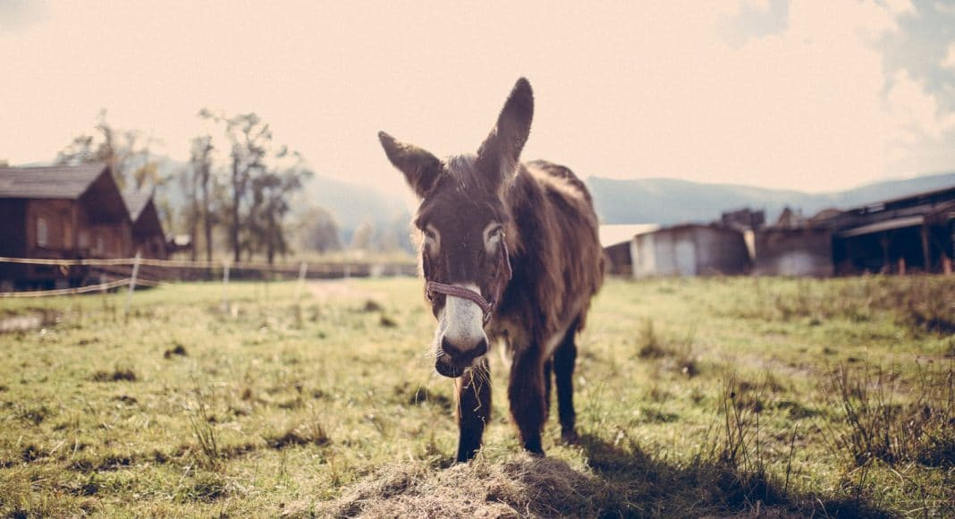 Sex With A Donkey