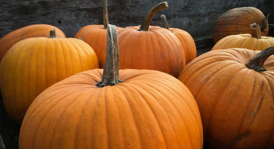 Pumpkin Edibles