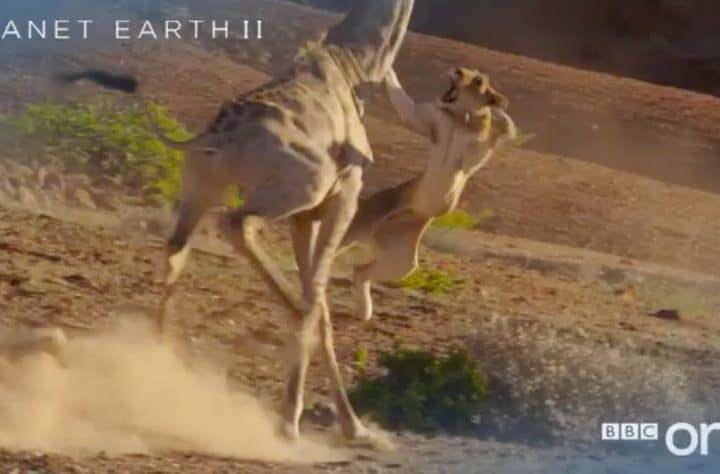 'Planet Earth II'