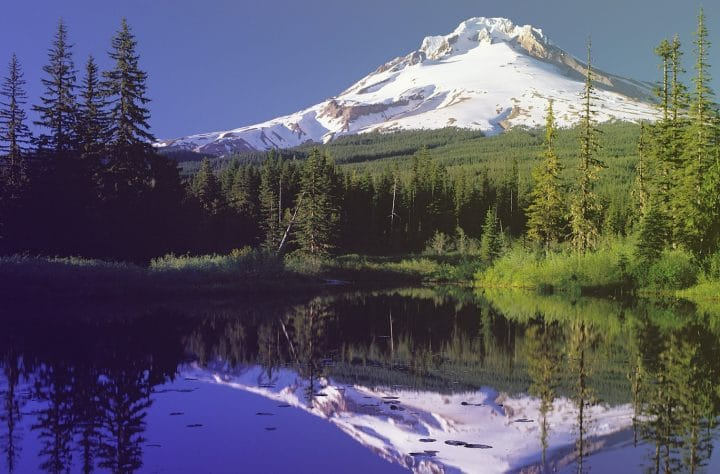 Oregon To 'Pause' Acceptance of Marijuana Applications