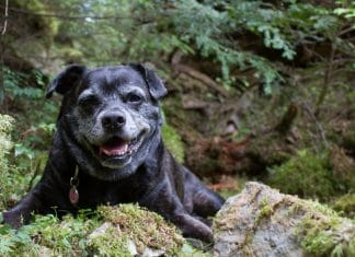 Canine Arthritis Is A Real Problem And Cannabis Could Be A Solution