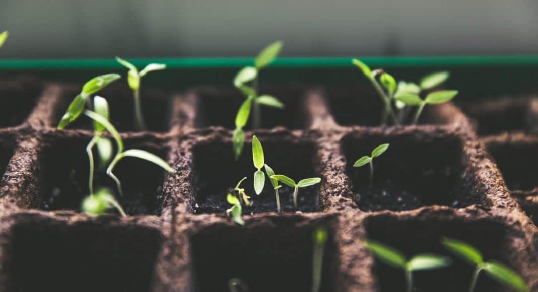 Growing Your Own Medical Marijuana