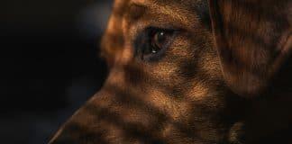Dog Shot Sleeping Girlfriend