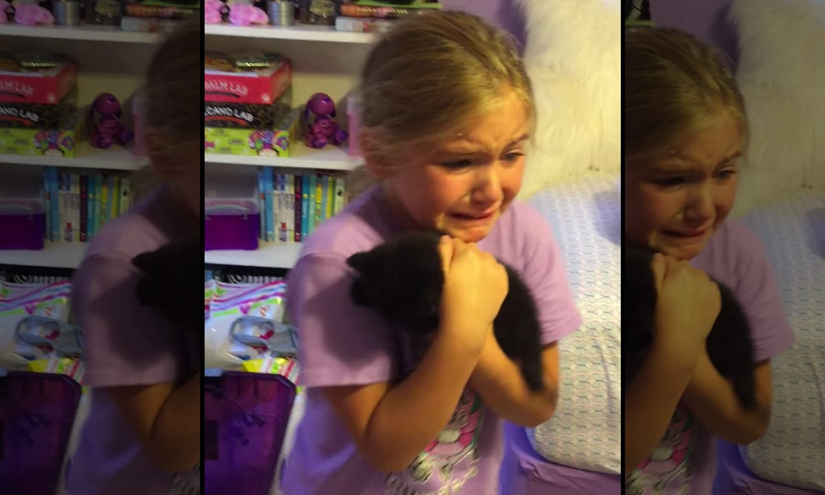 Watch: People Losing It When Meeting Their New Pets For The First Time