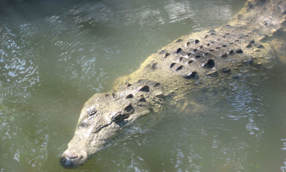 croc-infested waters