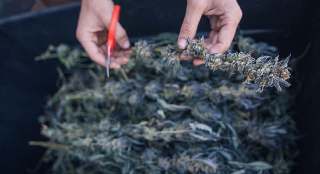 Organic Standards For Marijuana