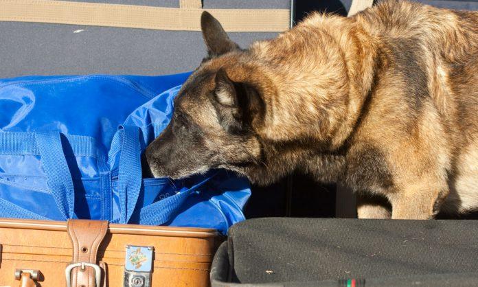 Drug-Sniffing Police Dogs