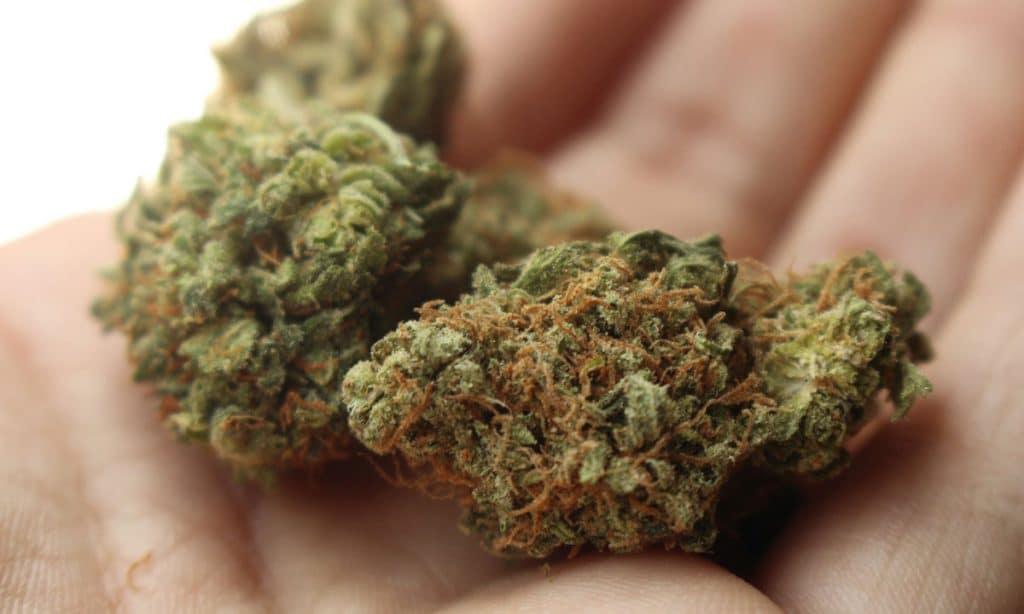 Marijuana Mecca