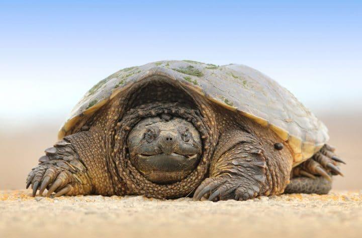Tortoise Saved