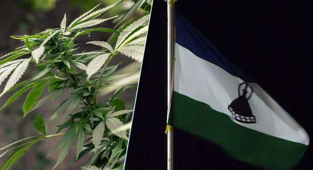 First African Marijuana License