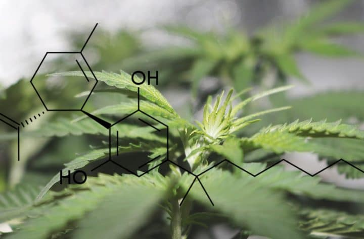 Top 5 Cannabinoids