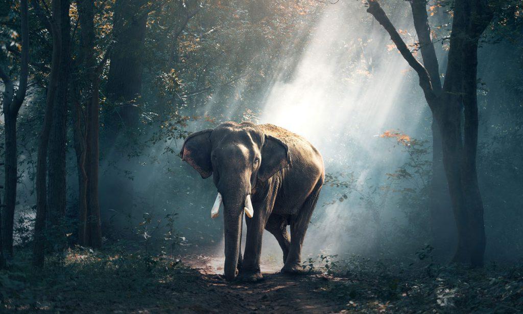 Selfie With Elephant