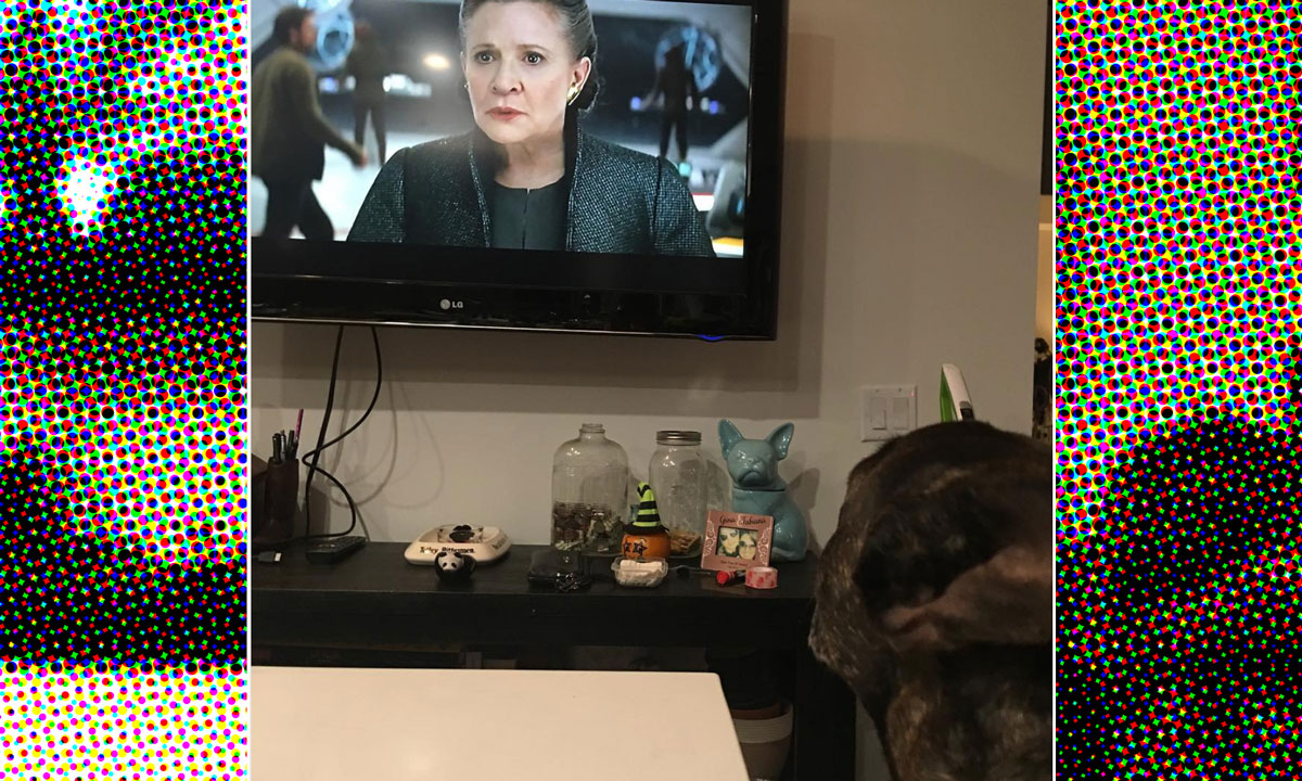 Carrie Fisher's Dog
