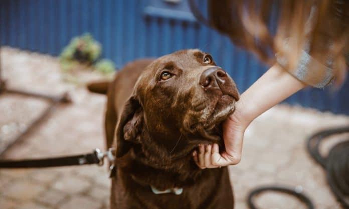 Marijuana Edibles For Dogs