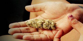Cannabis Science