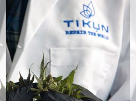 Israeli Premium Cannabis Brand