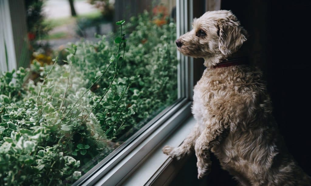 Medical Marijuana And CBD Can Help Old Dogs Learn New Tricks