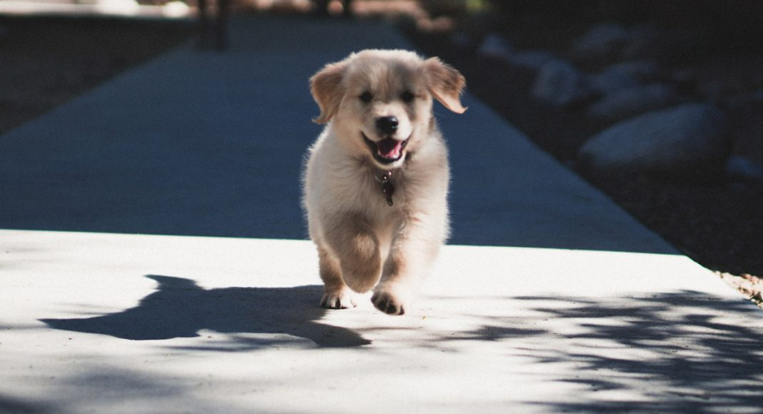 Puppy Pilates