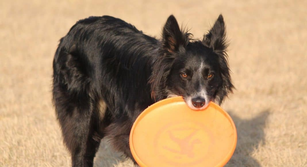 4 Reasons Why Marijuana And Frisbees Are Perfect Together