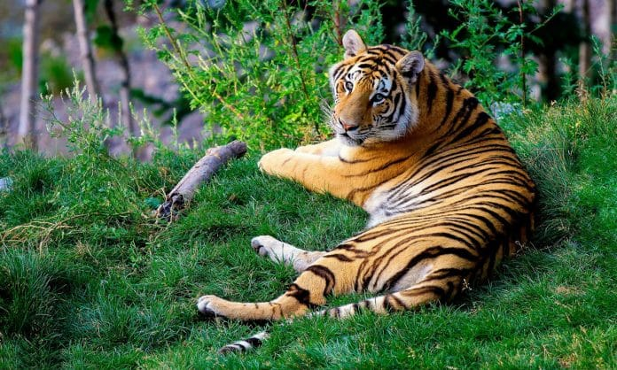 Standoff With Tiger Ends When Cops Realize It's A Large Stuffed Animal