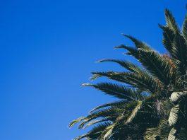 5 Things To Expect From California's Marijuana Gray Market Crackdown