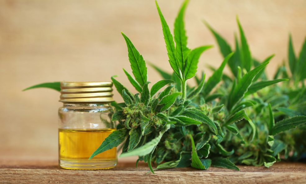 Everything You Need To Know About Cannabis Oil