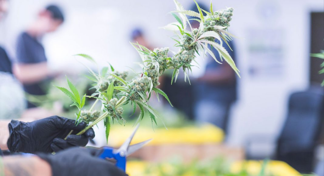 Forbes: Legal Cannabis Will Create One Million Jobs By 2025
