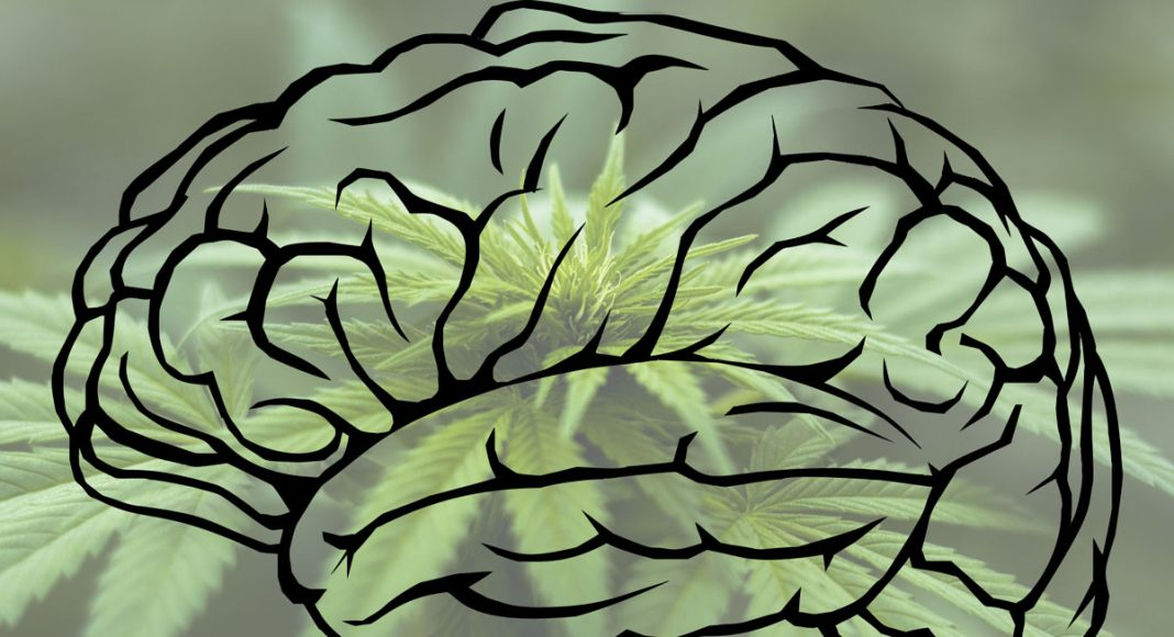 Can Marijuana Help Regrow Human Brain Cells?