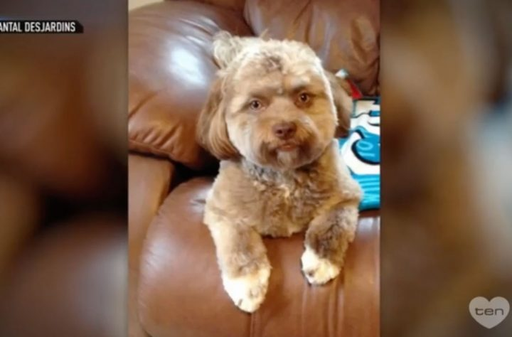 People Are Freaking Out Over This Dog's Human Face