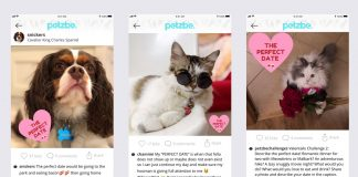 Petzbe, The Social Media App For Dogs And Cats