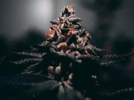 4 Super-Discreet Ways To Use Marijuana