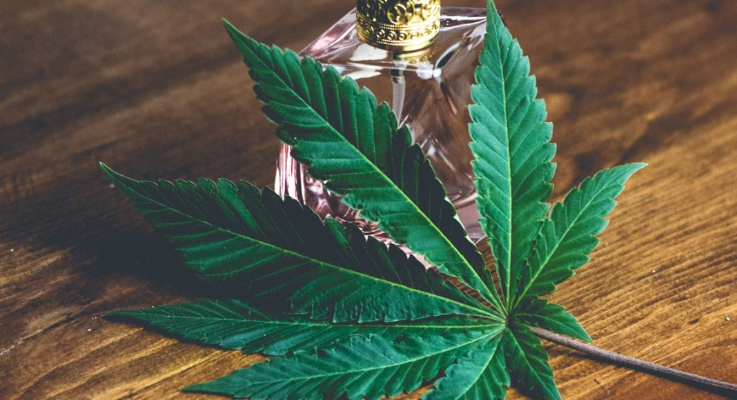 Why Are Cannabis Terpenes So Very Important?