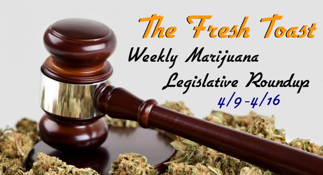 The Fresh Toast Marijuana Legislative Roundup: April 16