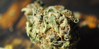Counting On Health: 7 Incredible Benefits Of THC