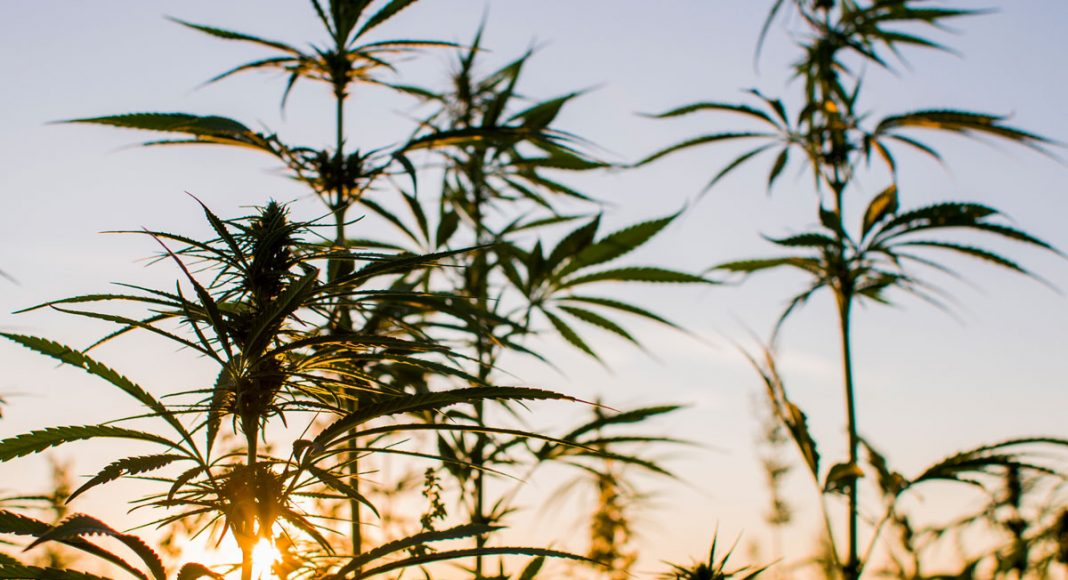 How Legalizing Marijuana Is Good For the Environment
