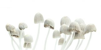 How One Dose Of Magic Mushrooms Can Change Everything
