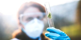 PA Approves Landmark Marijuana Research For State Universities