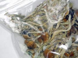 Denver And Oregon Now Want To Legalize Psychedelic Mushrooms