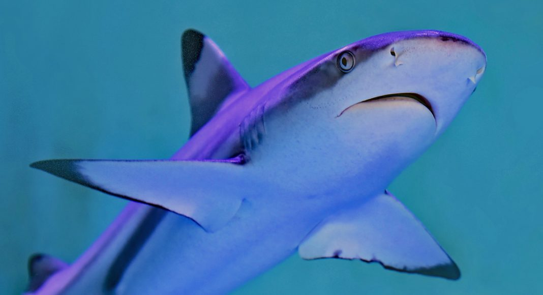This App Can Keep You From Being Eaten By A Shark