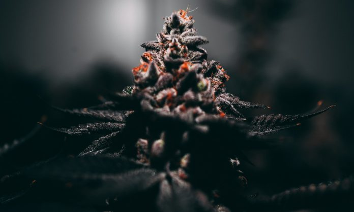 You Have The Highest THC Strain. So What?