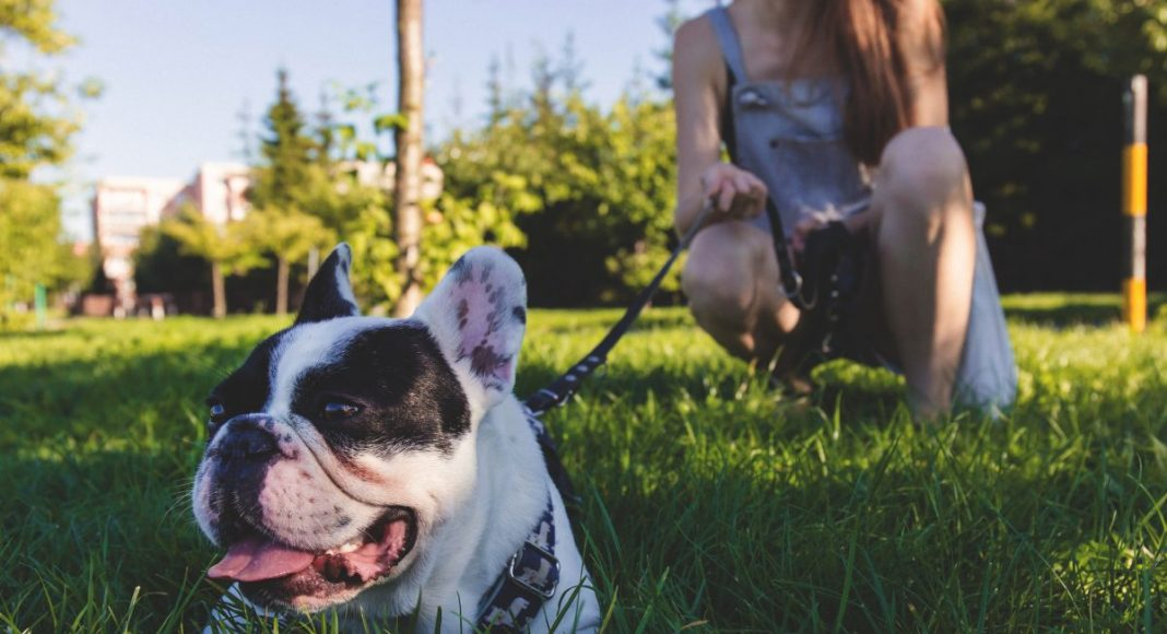 Women Dogs