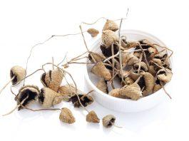 A Bill Is Underway To Decriminalize Magic Mushrooms In Denver
