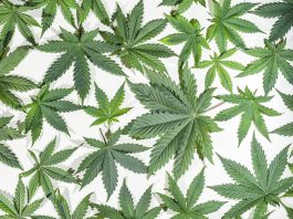 Coming Soon: World's Largest Museum Dedicated To Cannabis