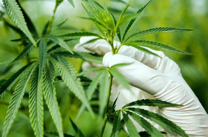 Democratic Congresswoman Introduces Bipartisan Cannabis Research Bill