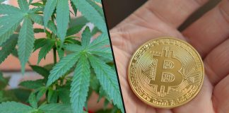 Is Legal Cannabis The New Bitcoin?