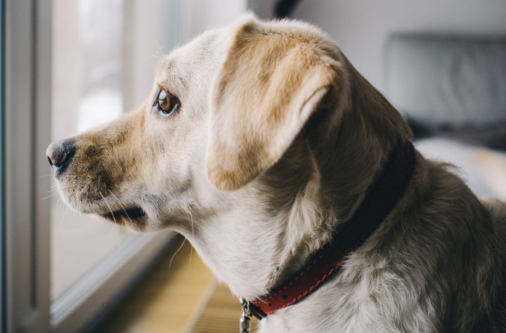 These Soothing Products Will Help Dogs Battle Anxiety
